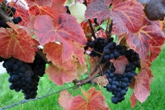 Herbstweinprobe Hagnau